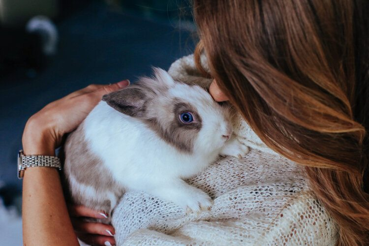 rabbit being cuddled