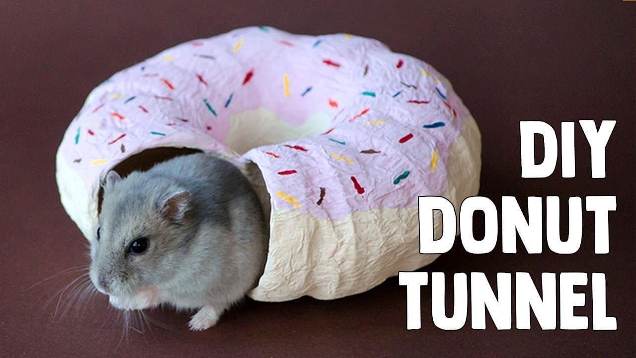 DIY Donut Tunnel by Erins Animals