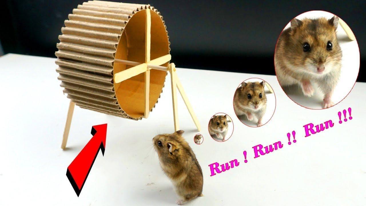 Easy Cardboard Hamster Wheel