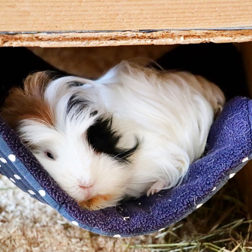 Fleece Hammock DIY Guinea Pig Bed Plans from Little Adventures