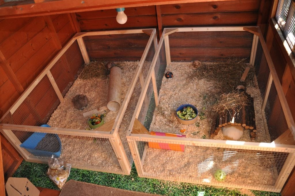 Guinea Pig Shed From Instructables Living