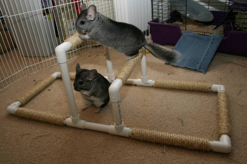 Gymnastic Bars DIY Chinchilla Toy Inspiration from Uncle Beast Books