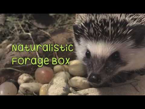 Nature Inspired Forage Box from Rattatea