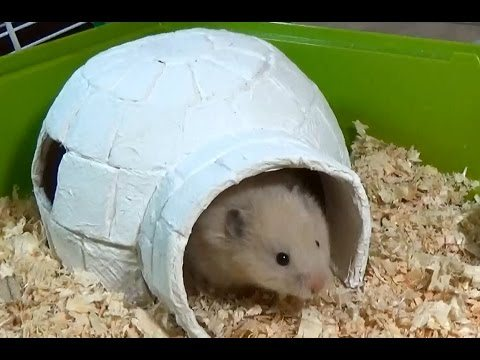 Paper Mache Igloo House From The Secret Life of My Hamster