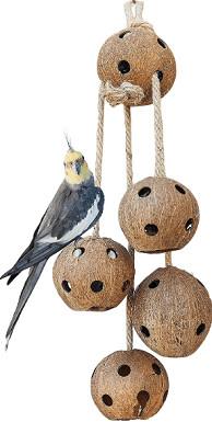 Pet Magasin Natural Coconut