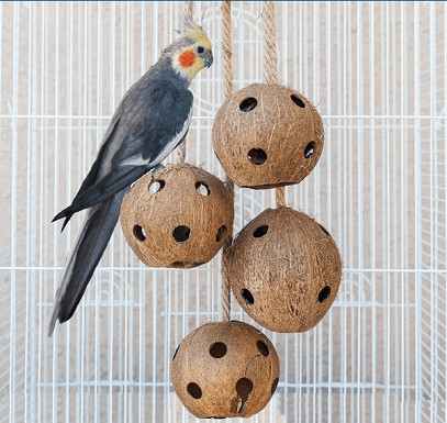 Pet Magasin Natural Coconut main