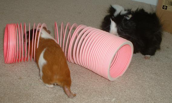 Slinky Tunnel by GuineaPigCages.com