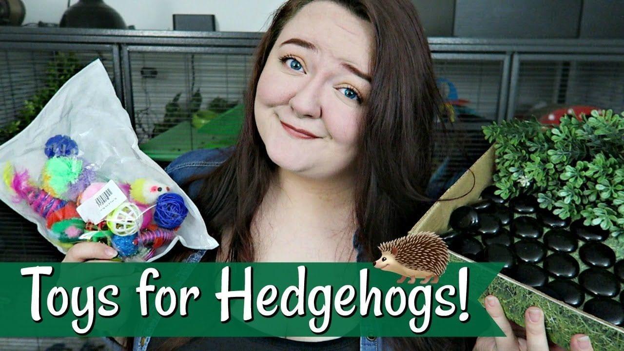 Tori Lynn's Favorite Hedgehog Toys