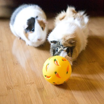 Wheeky Treat Ball Toy for Guinea Pigs, Rabbits, Hedgehogs and Other Small Pet