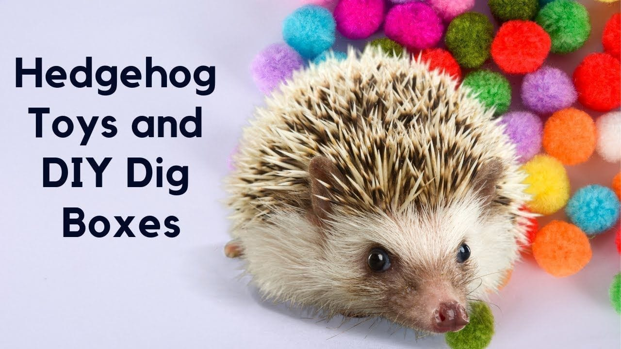 Zara's Zoo DIY Toys and Dig Boxes for Hedgehogs