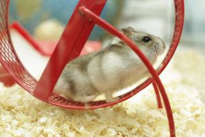 hamster red wheel