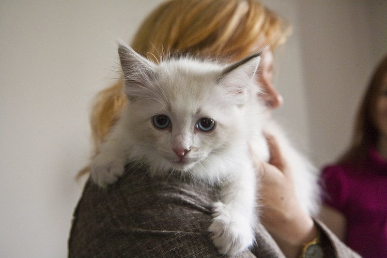 white cat on owners shoulder
