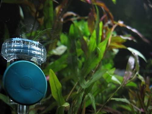 AQUATEK 3-in-1 CO2 Diffuser inside aquarium