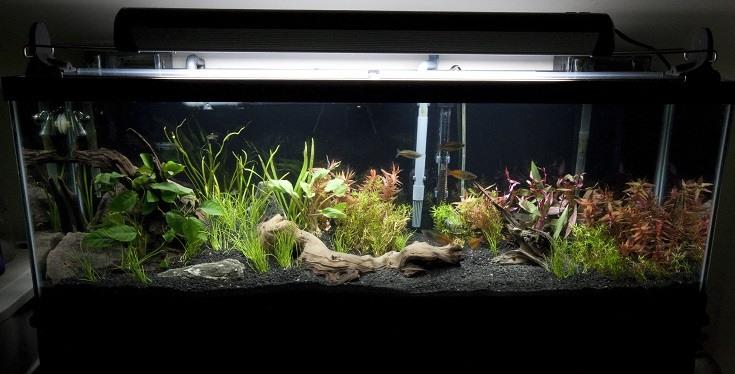 Clean Aquarium Tank