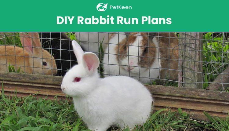 diy rabbit run plans