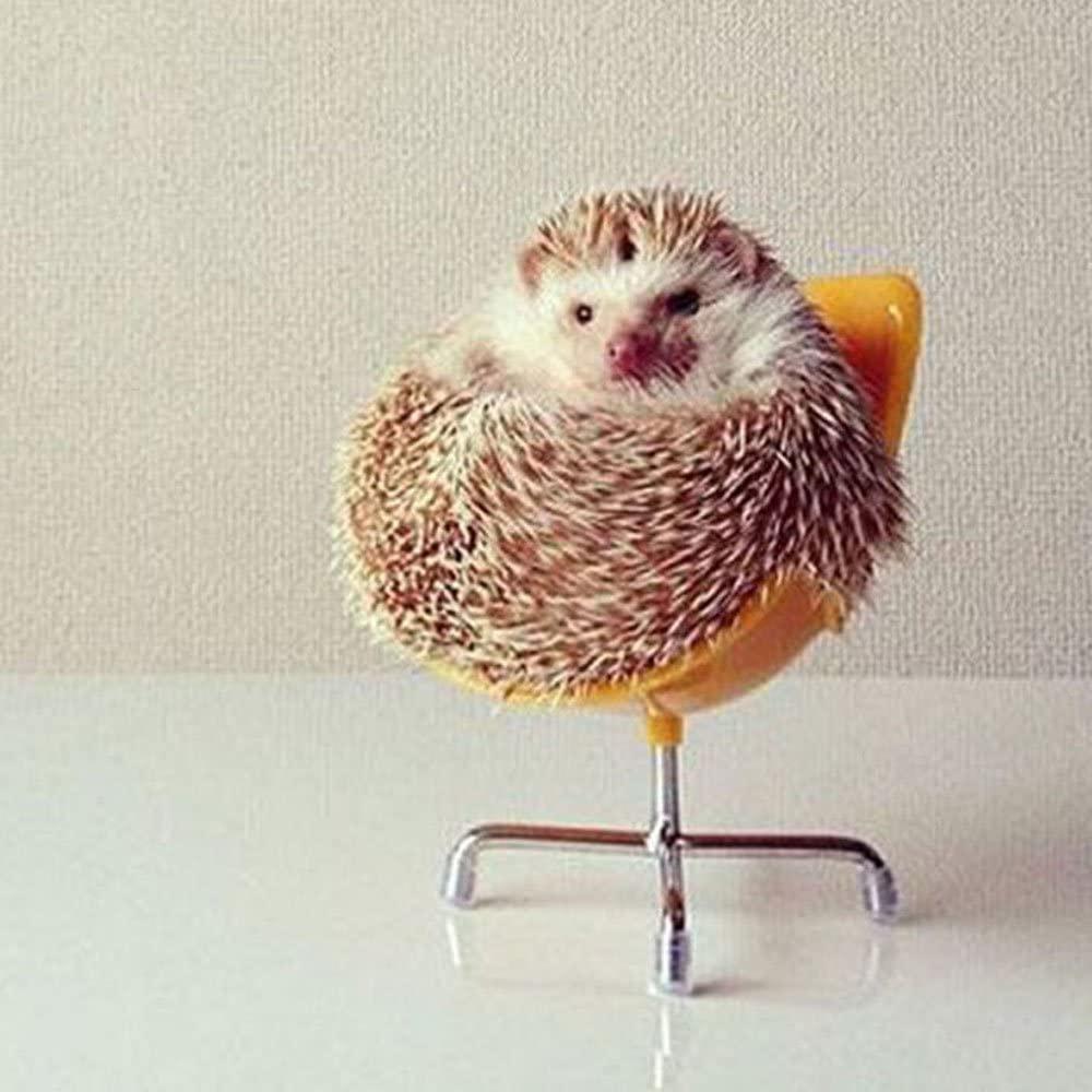 hedgehog in chair