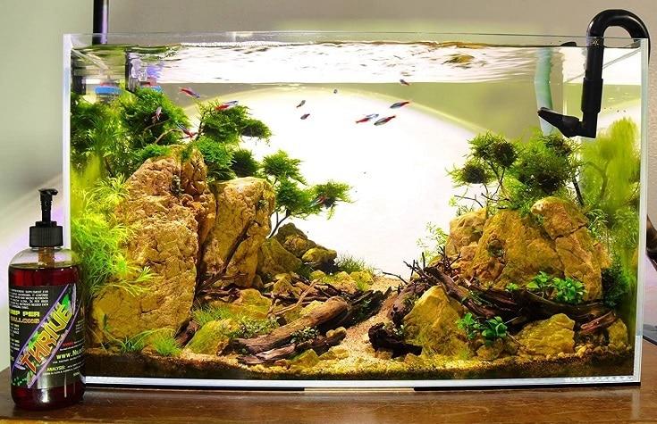 Fertilizing Aquarium Plant