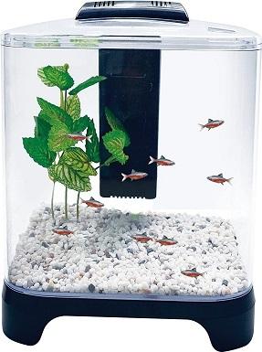 Penn Plax Betta Fish