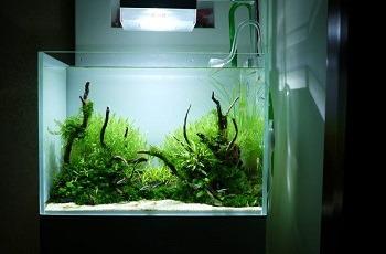 Small Clear Aquarium