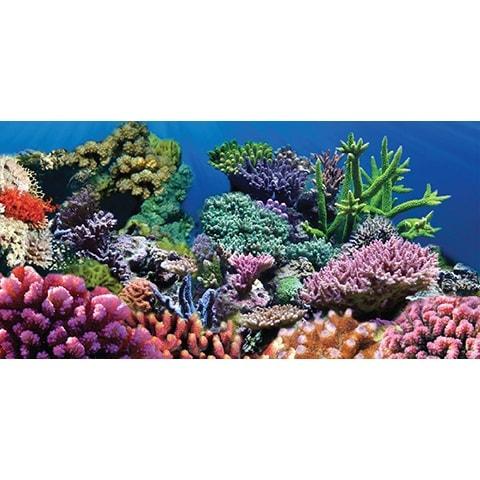 Sporn Static Cling Coral Aquarium Background