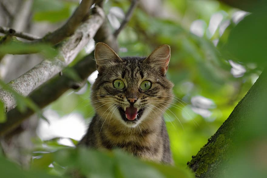 aggressive cat in tree