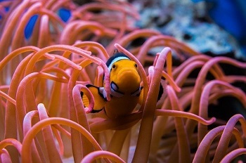 Best Food for Clownfish
