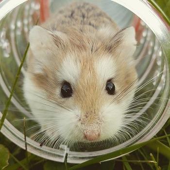Hamster Water