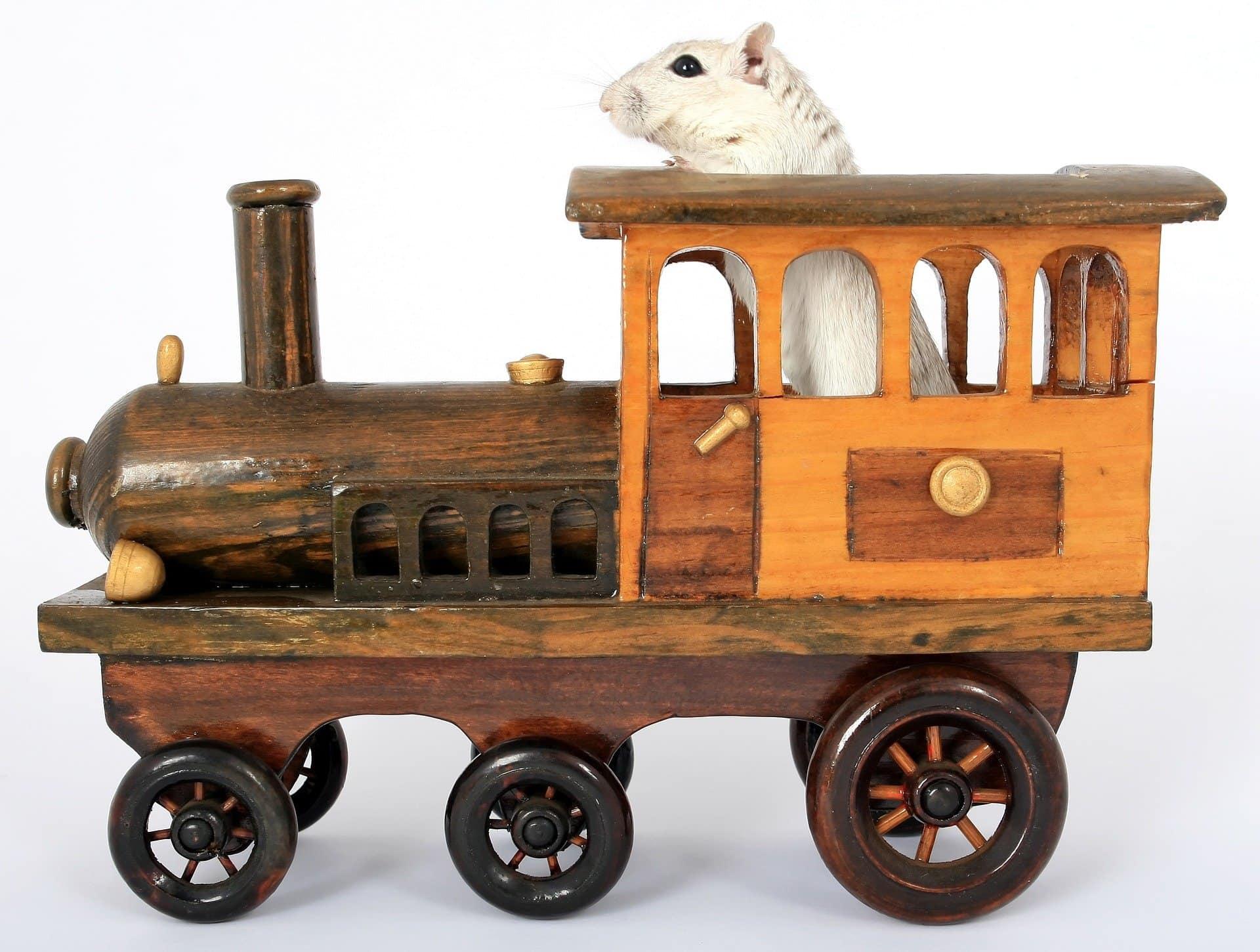 hamster on train