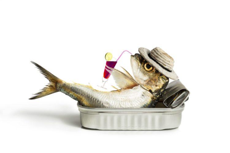 sardine drinking alcohol
