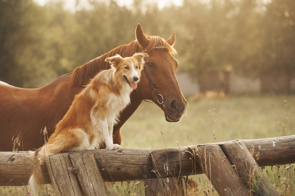 dog with horse at ranch