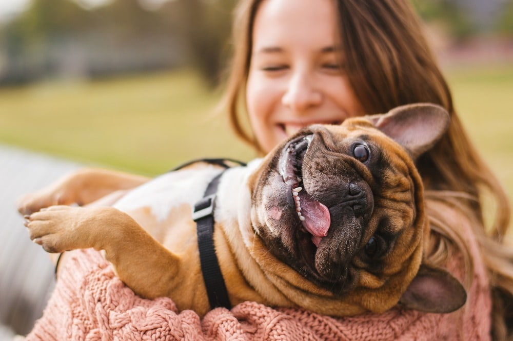 happy frenchie with owners