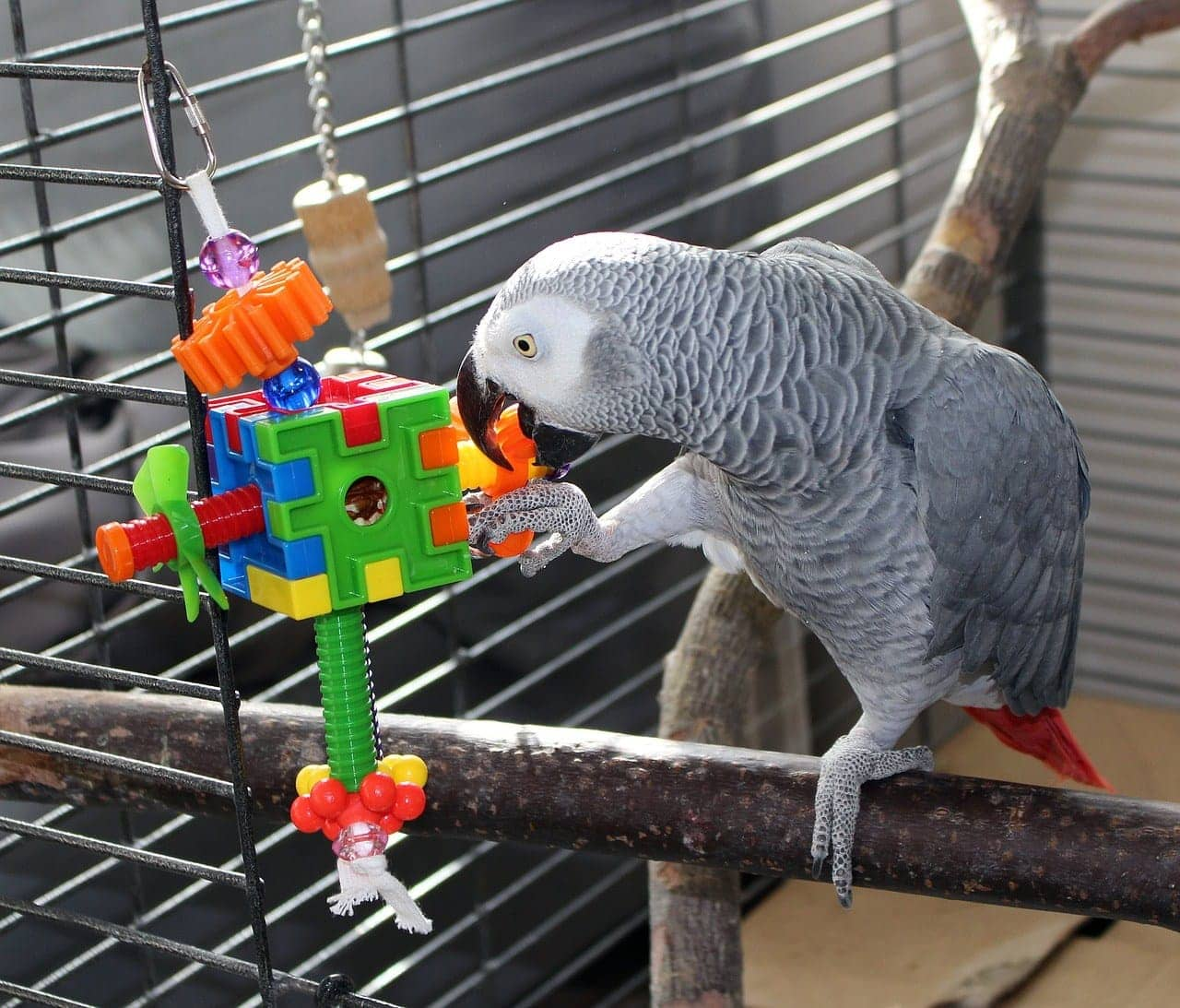 parrot playing toy