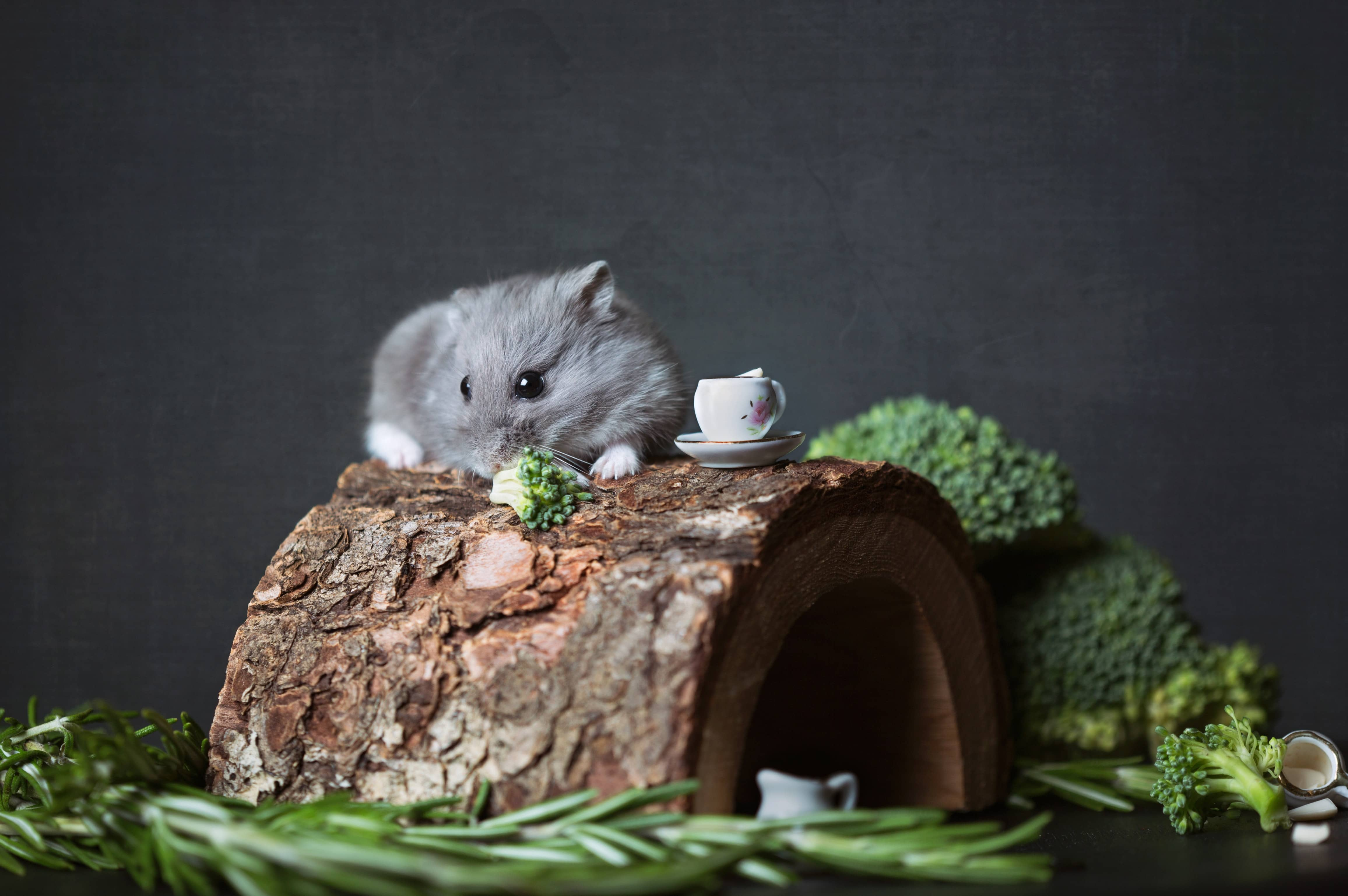 hamster tea party