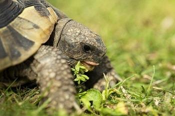 Best Turtle Foods
