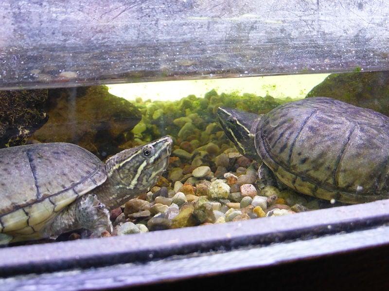 turtle inside terrarium