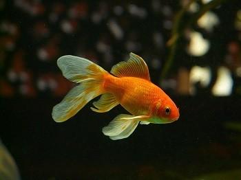 Best Goldfish Foods