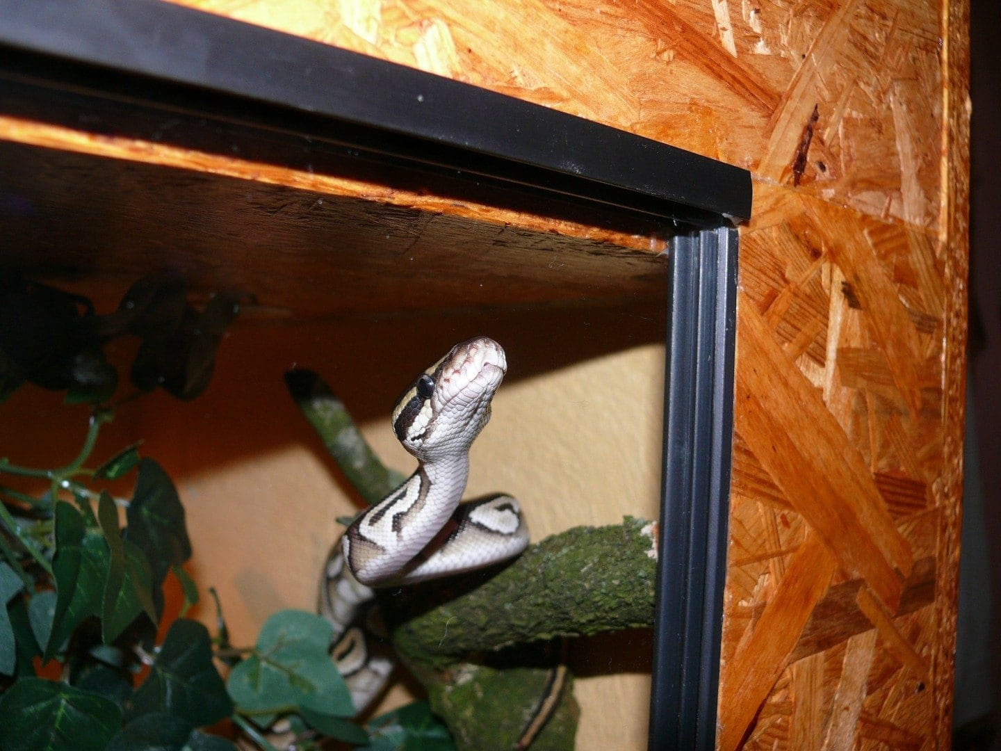 8 Best Reptile Terrariums Tanks Reviews 2021 Pet Keen