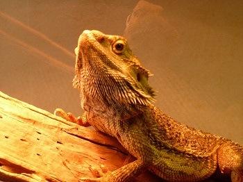 Reptile Light