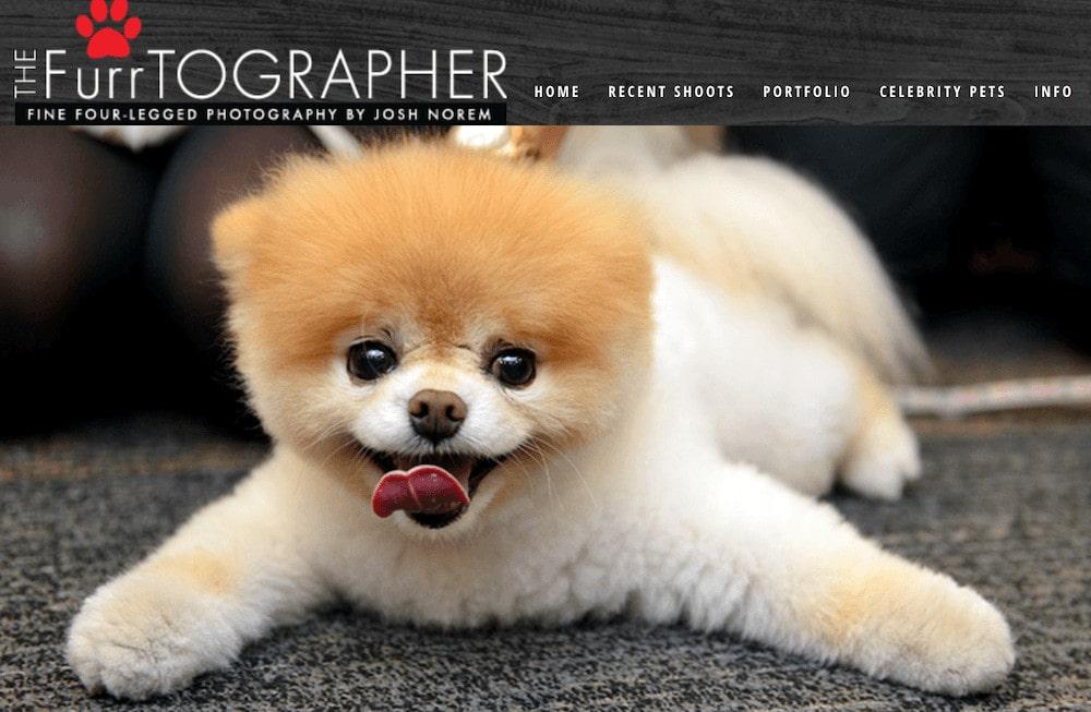 The Furrtographer pet blog