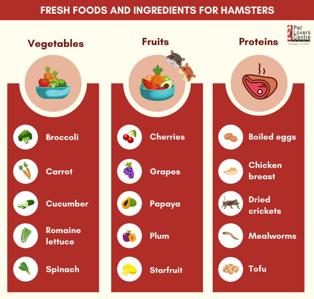 What can hamsters eat - fresh foods and ingredients