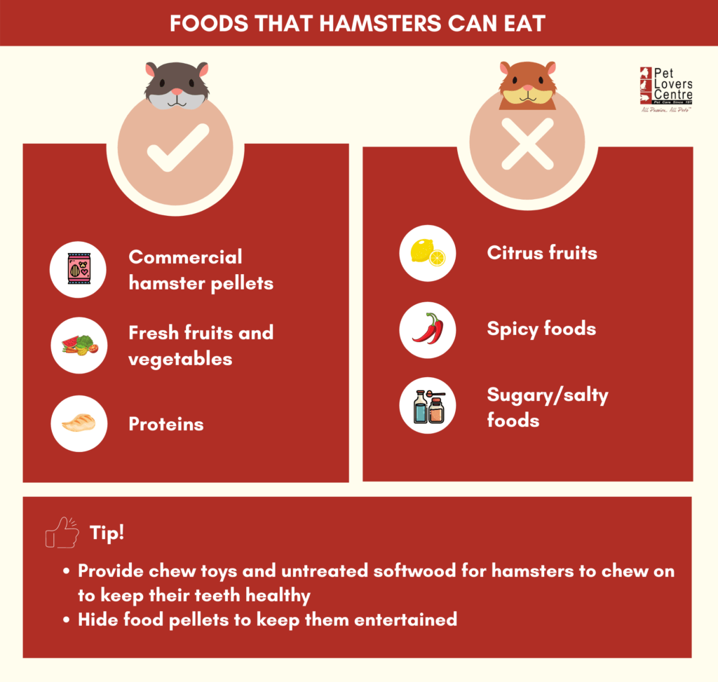 What can hamsters eat - summary infographic