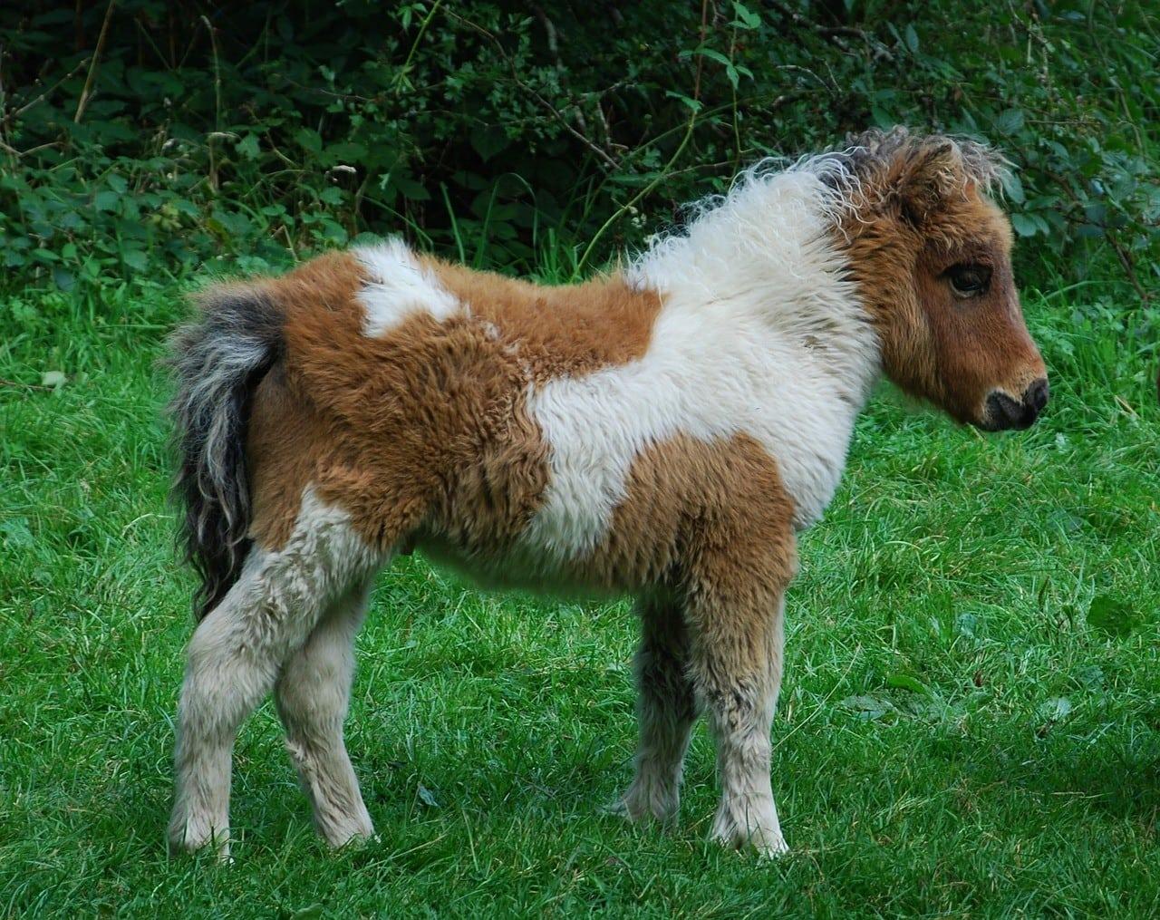 pony in grass