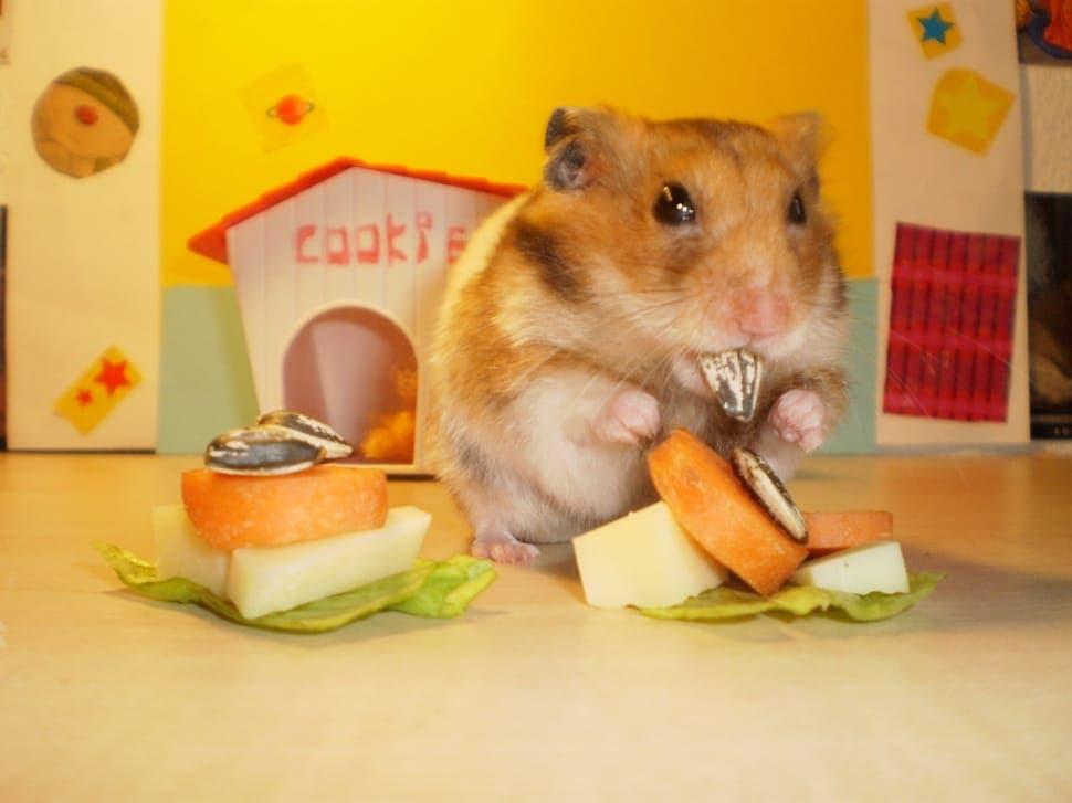 hamster eating fruits