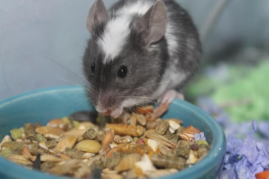 hamster eating pellets