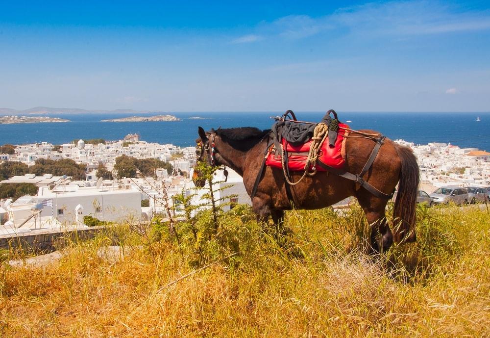 Horse grazing in greece