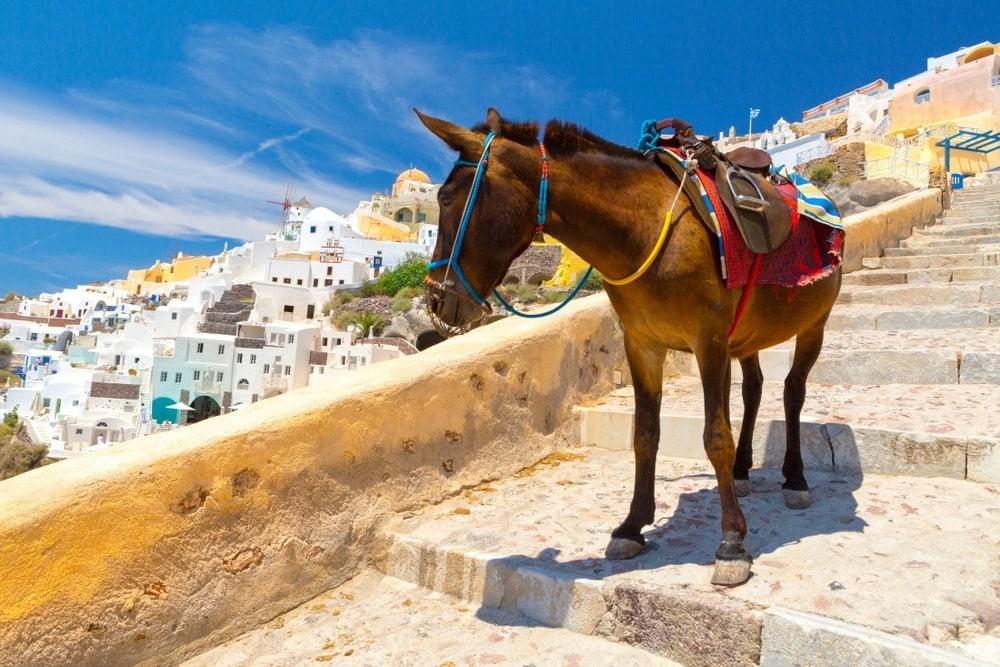Greek Horse Santorini