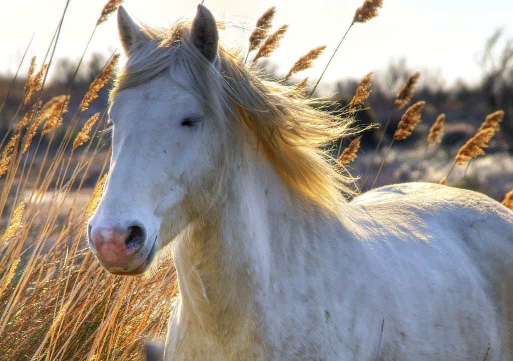 100 White Horse Names Ideas For Pure Natural Horses Pet Keen