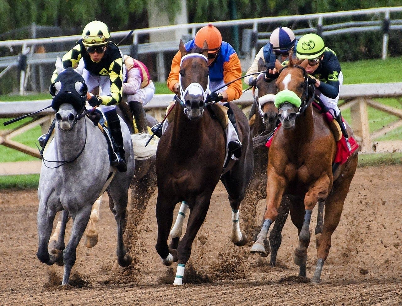 racehorses on track