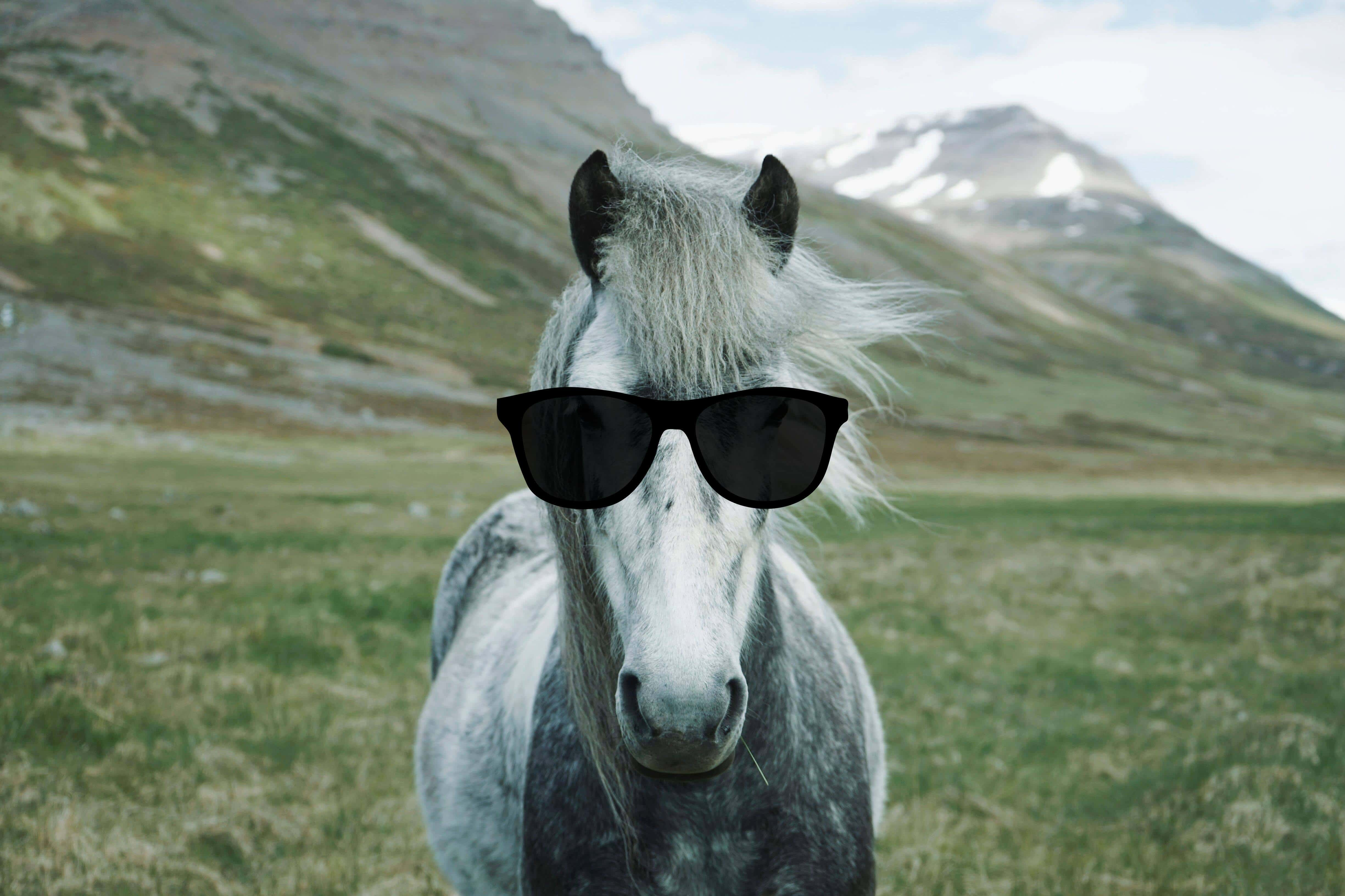 Cool celebrity horse