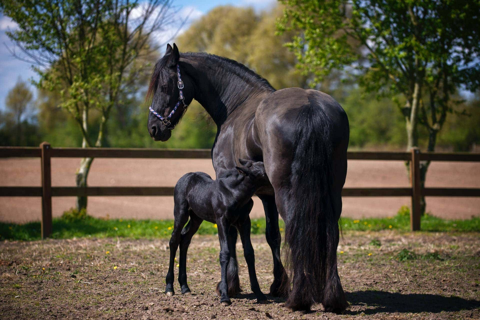100 Black Horse Names Ideas For Dark Mysterious Horses Pet Keen